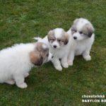 Benji, Bessy a Baron